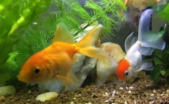 办公室为什么要养鱼旺风水