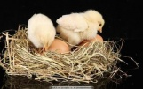2017年属鸡的宝宝名字就该这样起